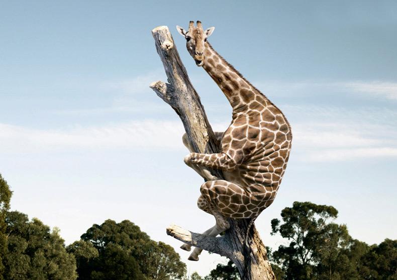external image giraffe1.jpg